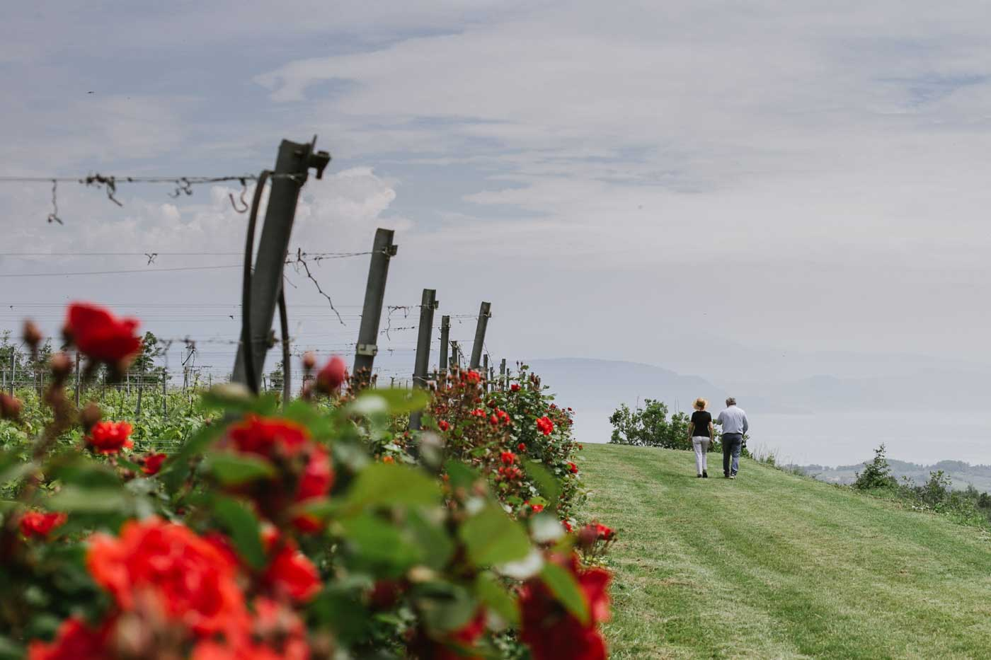 patrizia-marazzi-wine-experience-camminare-vigneti