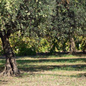 tour a piedi con degustazione olio valtenesi - Lago di Garda