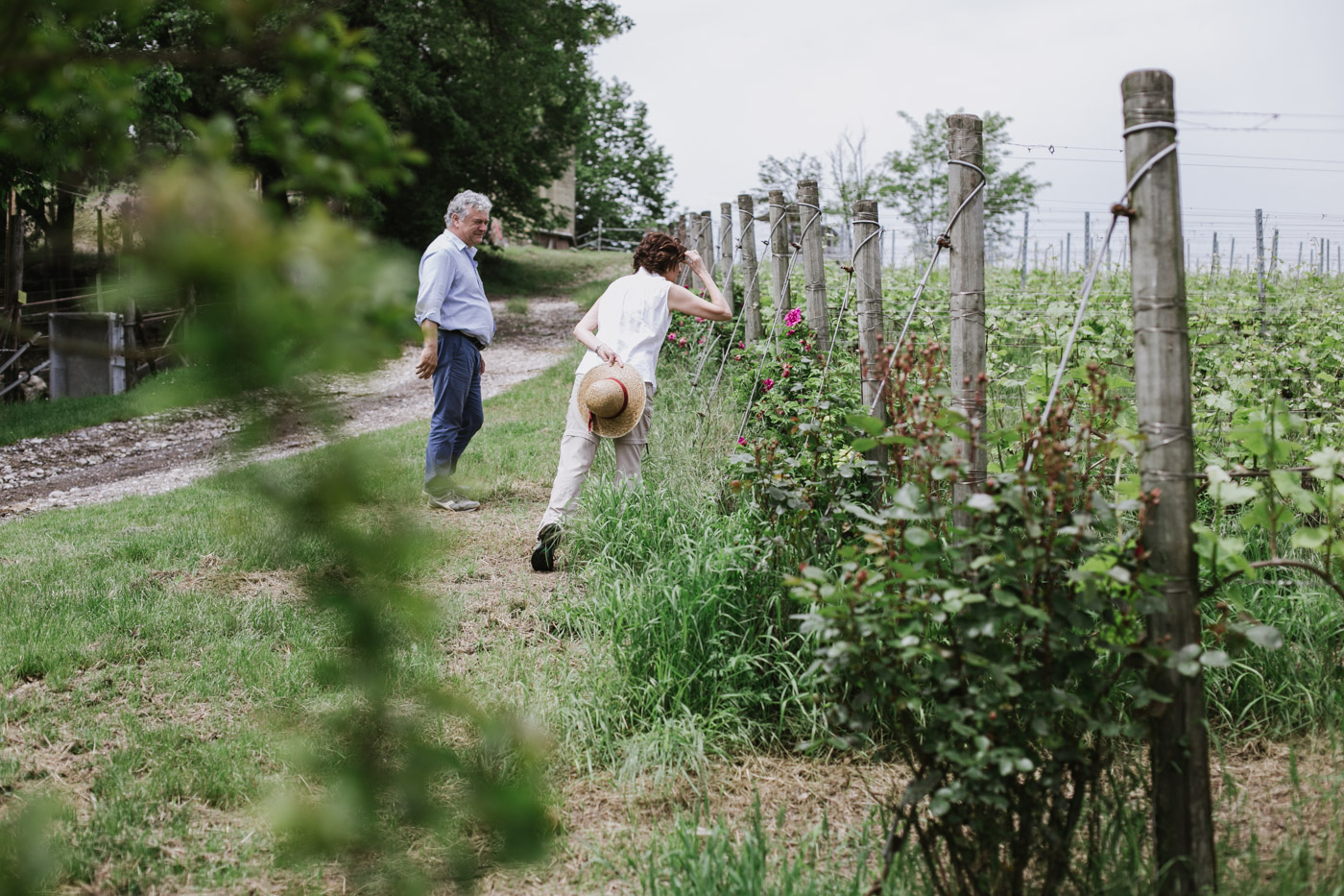 Wine tour a piedi in Valtenesi