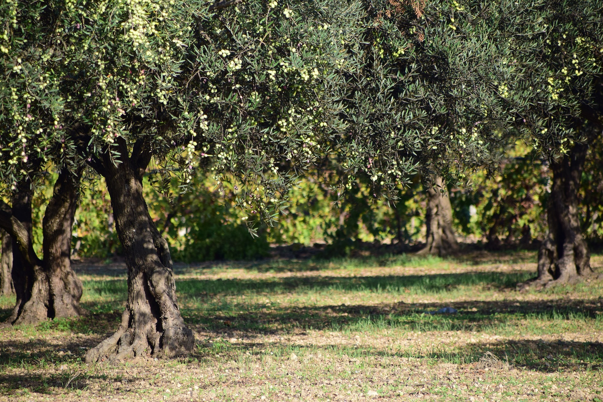 walking tour with evo oil tasting - Lake Garda